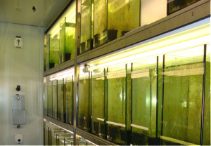 Algae and Bio Marine Research
